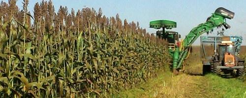 El compost incrementa el contenido de azúcar en plantas de sorgo