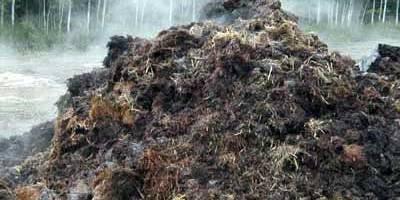Bacterias degradadoras de antibióticos en el compost