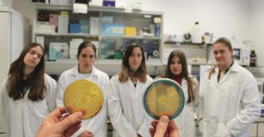 Amplificación del ADN, y resultados de las actividades PGPRs y nodulación de plantas