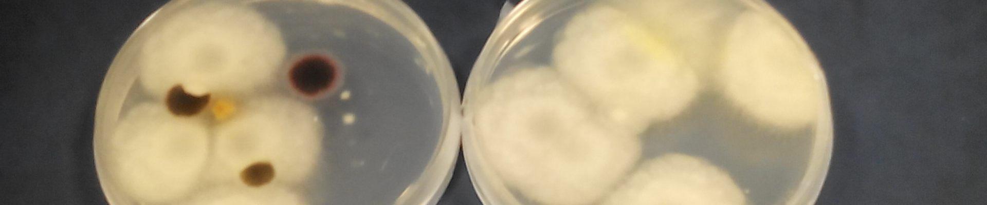 Patógenos durante el compostaje