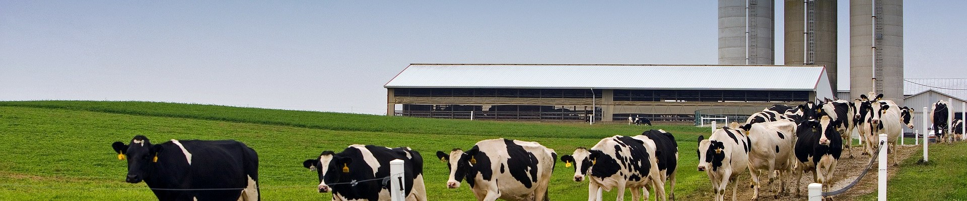 Materiales para compostar: estiércol de vaca