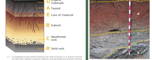La compleja formación del suelo