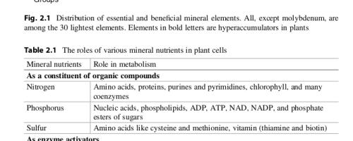 Los nutrientes esenciales para las plantas