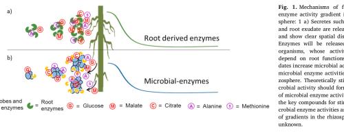 Los exudados de la raíz activan a los microorganismos de la rizosfera