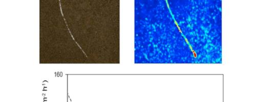 La zimografía nos permite conocer la actividad enzimática en un suelo sin alterarlo