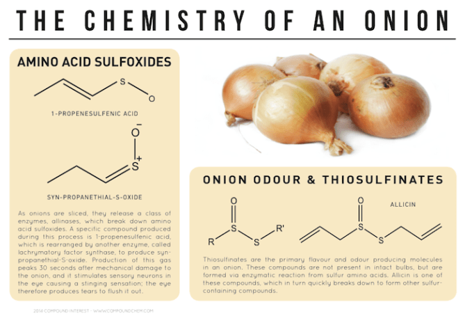 The Chemistry of an Onion | Compound Interest