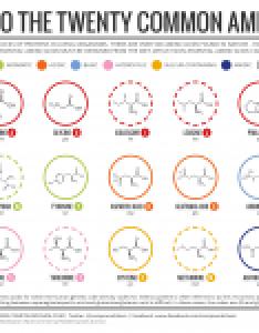 also  brief guide to the twenty common amino acids compound interest rh compoundchem