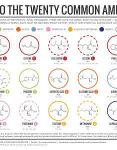 Easy amino acid chart also mcat rh reddit