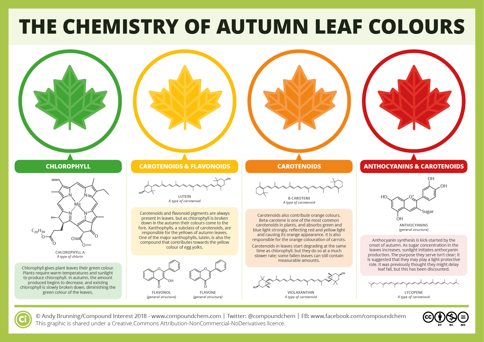 Shades Of Autumn How And Why Leaves Change Colour