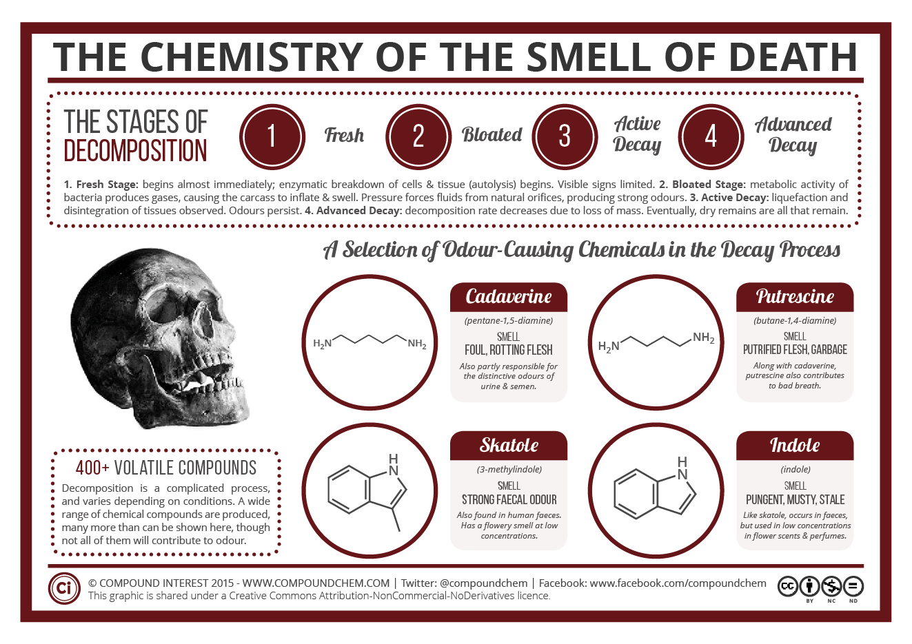 The Chemistry Of The Odour Of Decomposition Compound