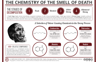 The Chemistry of the Smell of Death