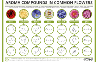 Aroma Chemistry - Scents of Flowers
