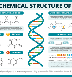 the chemical structure of dna compound interest rh compoundchem com dna replication diagram dna structure [ 1654 x 1169 Pixel ]