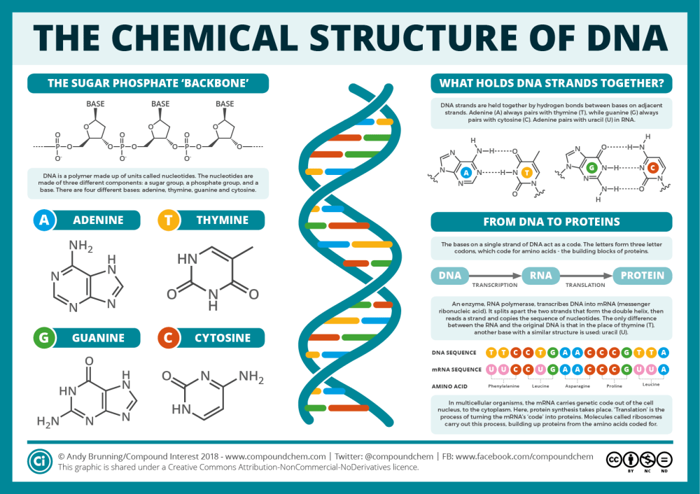 medium resolution of the chemical structure of dna compound interest rh compoundchem com dna replication diagram dna structure