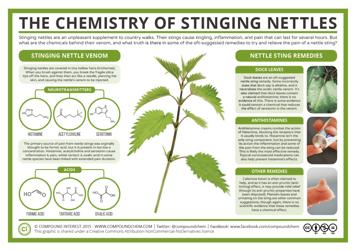 The Chemistry of Stinging Nettles 2016