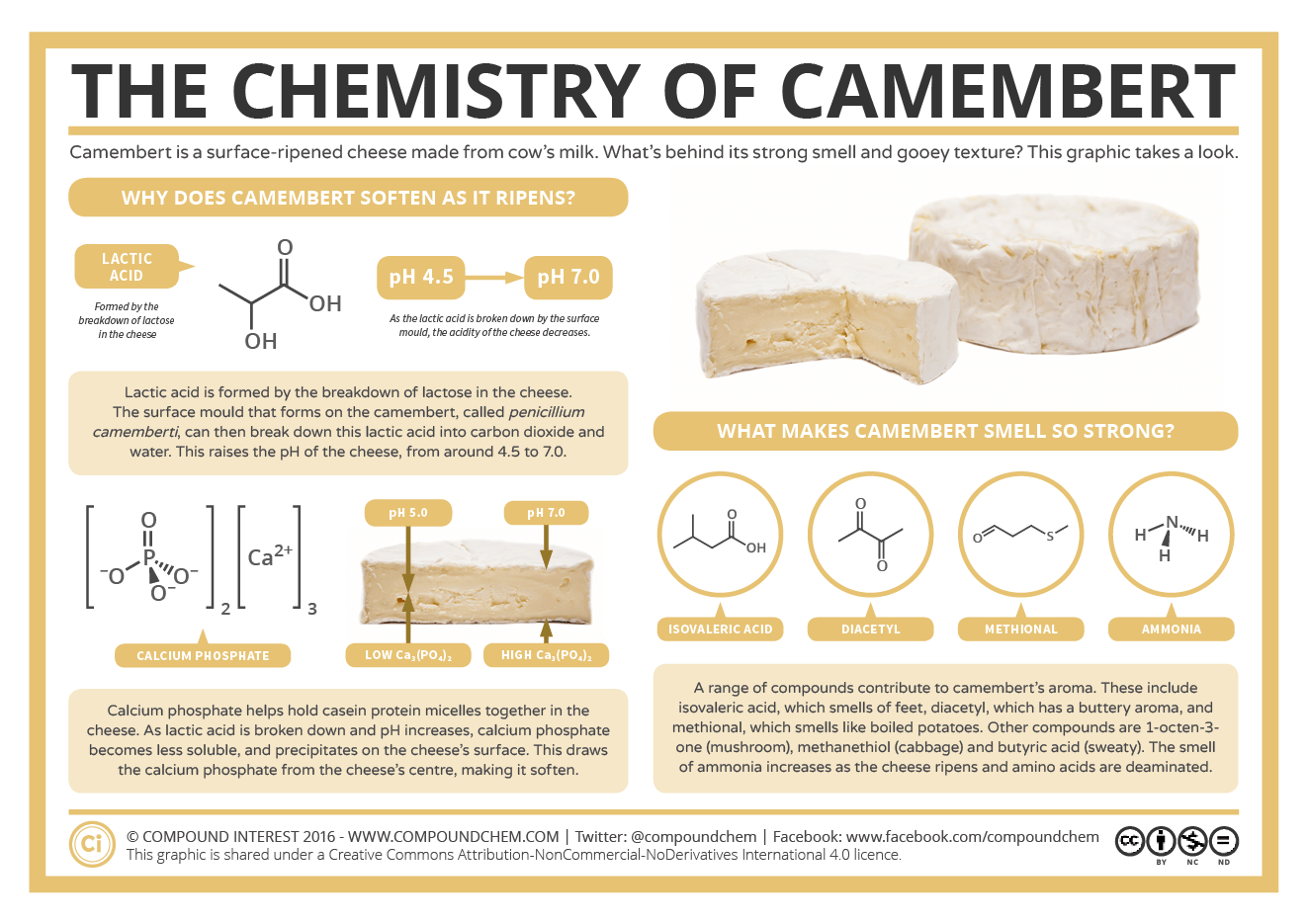 The Chemistry Of Camembert