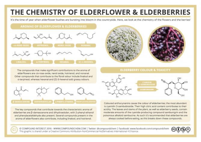 The Chemistry of Elderflower & Elderberries