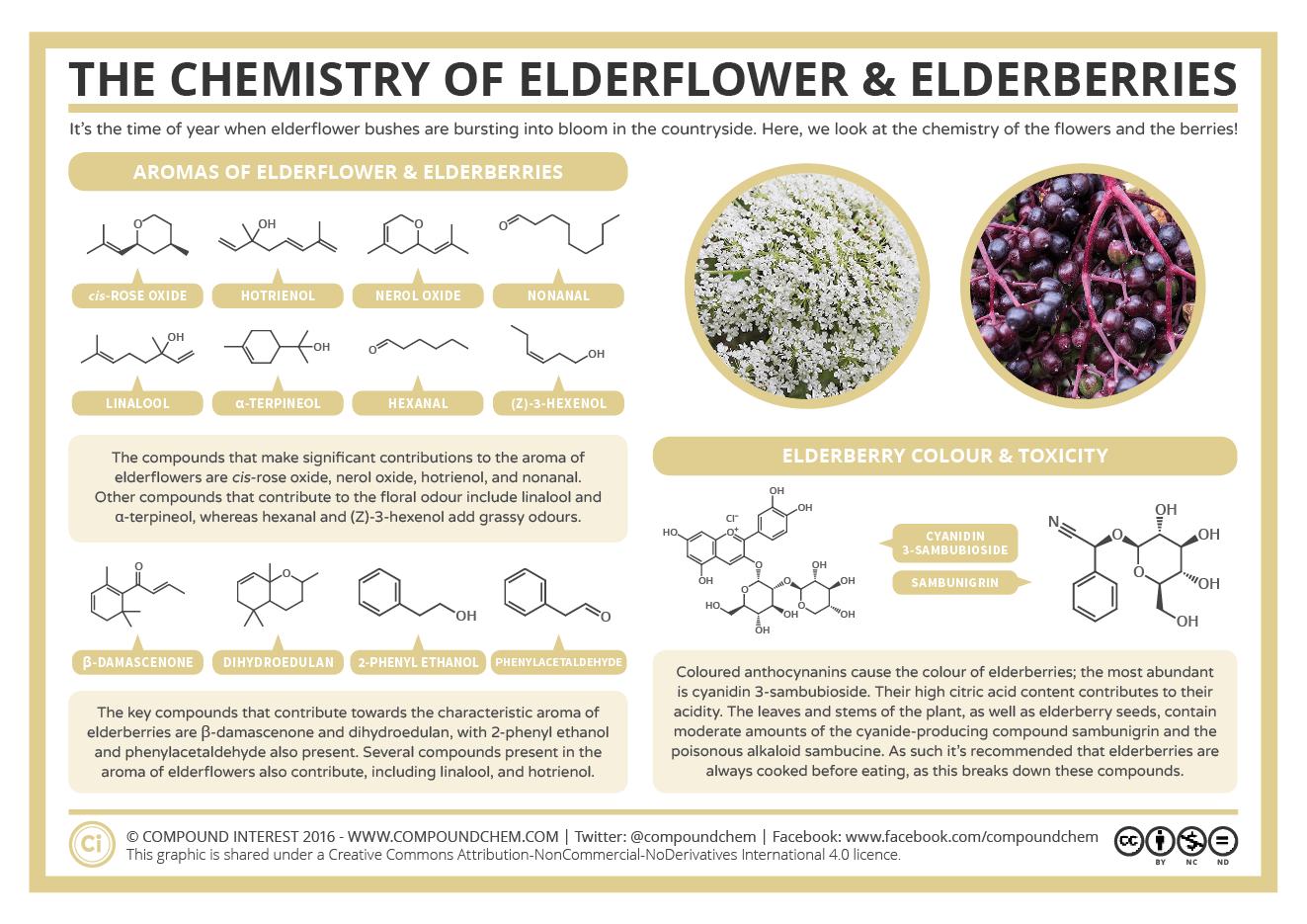 The Chemistry of Elderflowers & Elderberries: Aroma, Colour