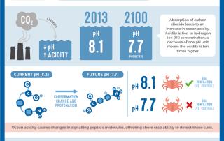 Ocean Acidification & Chemical Signalling