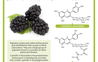 Blackberry Chemistry