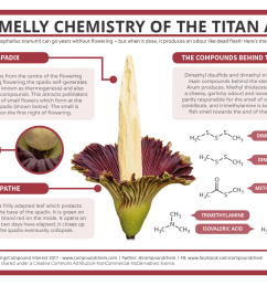 the smelly chemistry of the titan arum corpse flower [ 1323 x 935 Pixel ]