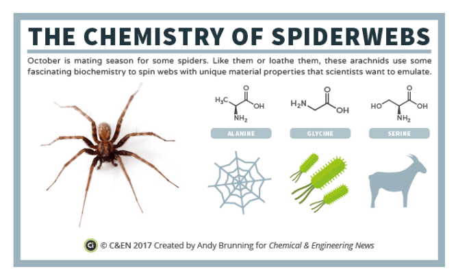 C&EN - The Chemistry of Spider Webs Preview