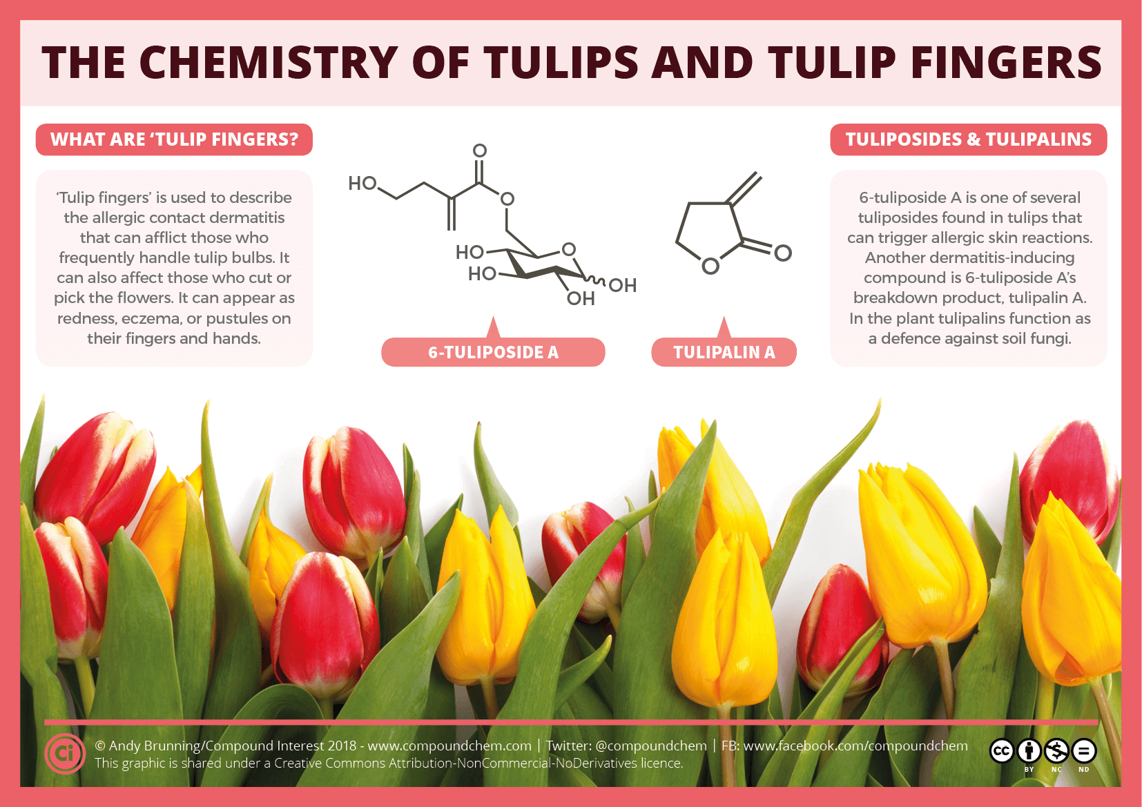 The Chemistry Of Tulips And Tulip Fingers Compound Interest
