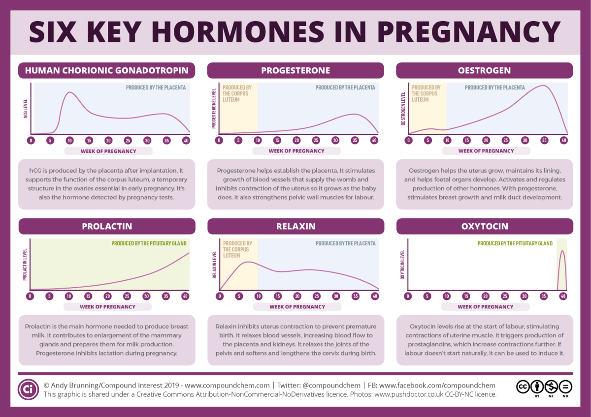 Six key pregnancy hormones and their roles – Compound Interest