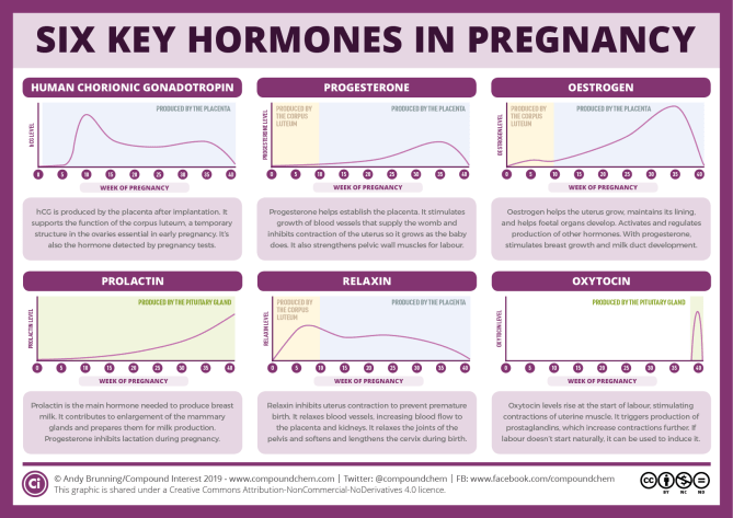Six Key Pregnancy Hormones And Their Roles  Compound Interest-6592