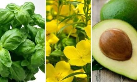 10 maneras de equilibrar sus hormonas en forma natural