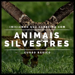 Curso Básico: Iniciando sua carreira com Animais Silvestres