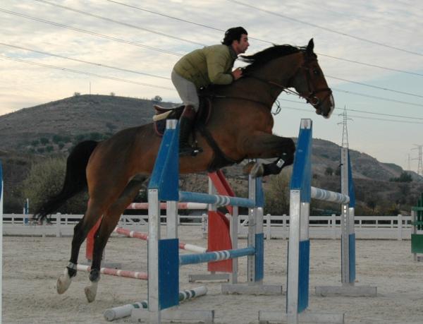 Comprar caballo ORGAGO DU MARAIS Silla Francs