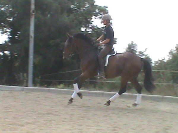 Comprar caballo Olimpia Silla Francs Doma clsica