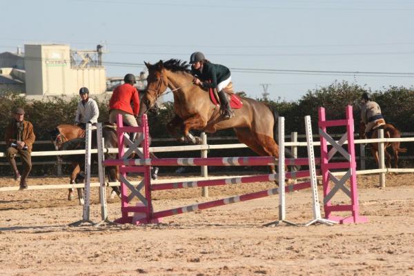 Comprar caballo Quenny de Venoux Silla Francs