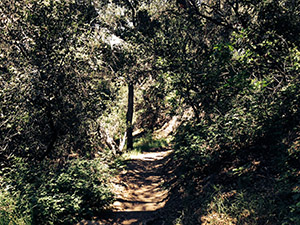 A Canopy of trees marble the path below with lacy shade patterns.