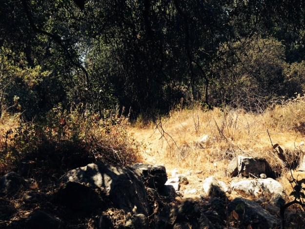 Rocks under a tree and sunburnt grass beyond