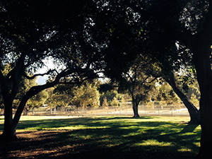 Shady trees make shadow patterns on the lawn of the park