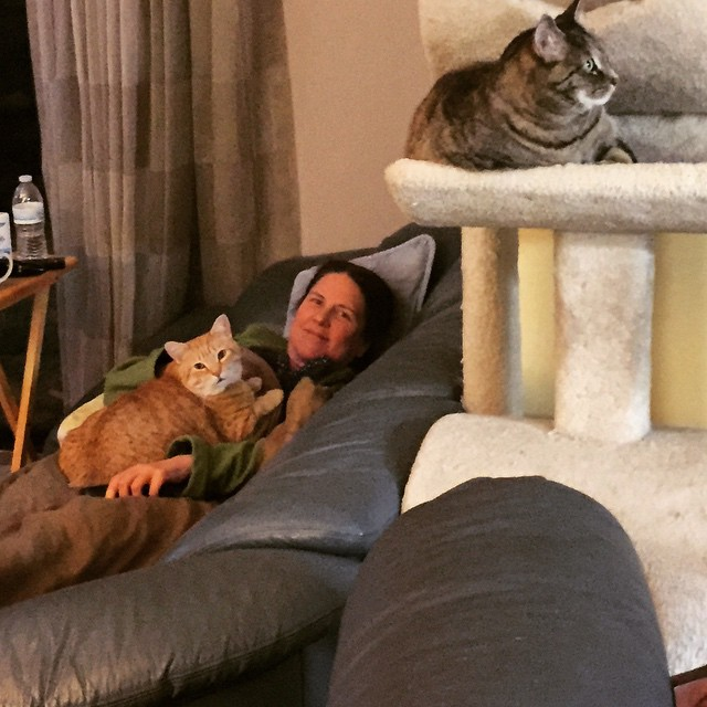 Laurie on the couch with Tiger, a ginger cat, on her tummy and Gracie a tabby cat, is on a high cat perch.