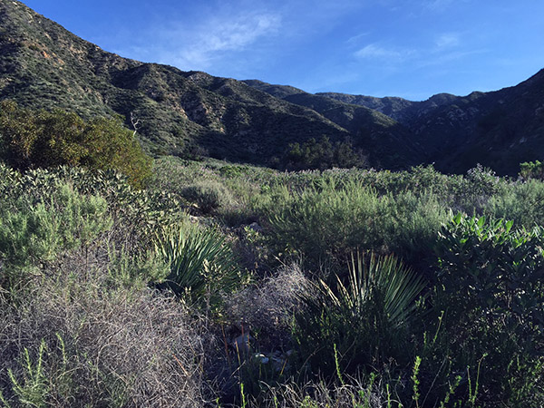 Wild flowers and grasses dot the mountain trail