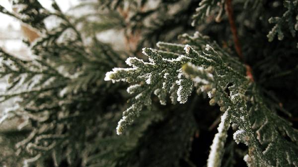 A green winter Firstlightofwinter wallpaper hd download