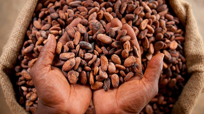 Ghana aims to process locally 50 percent of its cocoa production