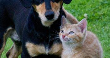 comunicati_stampa_notizie_animali_cane_gatto