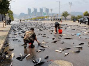 Lluvia de peces Honduras