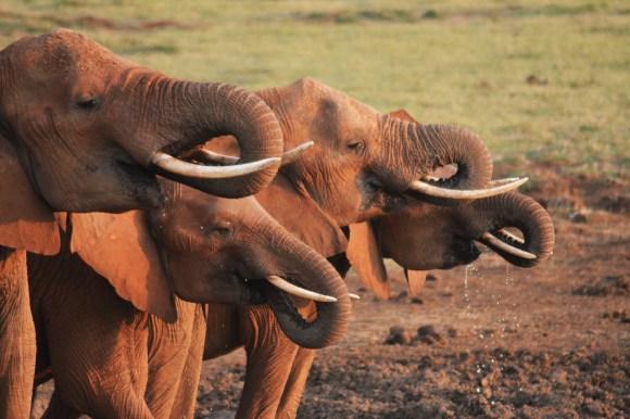 46.5.19_Kenia_ACC-5-ElefantesEnTsavo