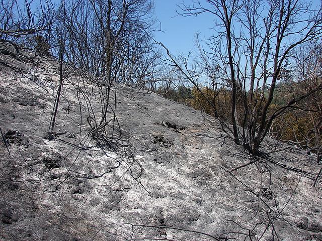 Resultado de imagen de un jardín quemado
