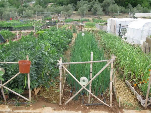 Huertas ecosociales de Azuqueca de Henares