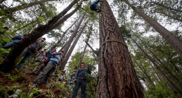 Men gather in the mountains of Baja Verapaz to cut down a pine tree, to be used in the El Palo Volador, the dance of Angels and Monkeys.  Photo: Santiago Billy/Comvite