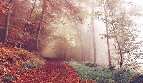 Con-TACT: get inspiration through metaphors from nature