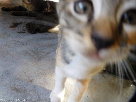 人なつこくカメラに興味津々な猫ちゃん
