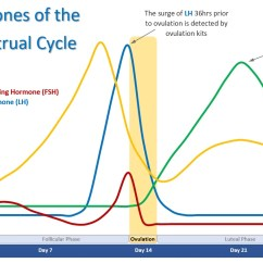 Menstrual Cycle Diagram With Ovulation Opel Astra H Wiring Calendar And Phases Conception Advice